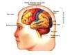 nervová soustava-2-07