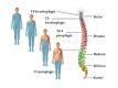 nervová soustava-2-09