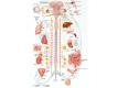 nervová soustava-2-11