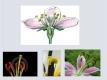 květy-09
