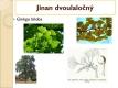 nahosemenné rostliny - 04