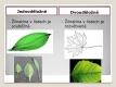 Jednoděložné a dvouděložné rostliny-05