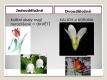 Jednoděložné a dvouděložné rostliny-06