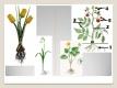 Jednoděložné a dvouděložné rostliny-08