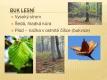 Listnaté stromy a keře-03