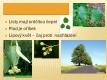 Listnaté stromy a keře-08