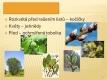 Listnaté stromy a keře-10