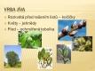 Listnaté stromy a keře-11