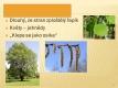 Listnaté stromy a keře-14