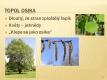 Listnaté stromy a keře-15