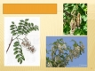 Listnaté stromy a keře-28