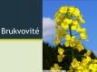 brukvovité - 01