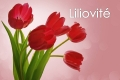 liliovité - 01