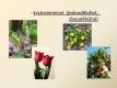botanika-08