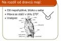 dravci,sovy-13