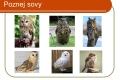 dravci,sovy-21