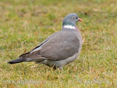 11-holub-hrivnac