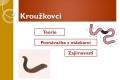 krouzkovci-01