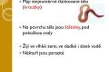krouzkovci-02