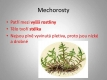 mechorosty-02