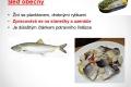 morske-ryby-04