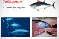 morske-ryby-06
