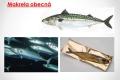 morske-ryby-07
