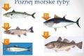 morske-ryby-11