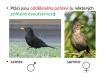 ptáci - rozmnožování-02