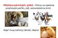 ptáci - rozmnožování-11