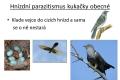 ptáci - rozmnožování-13