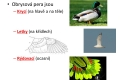 ptác i-stavba těla - 11