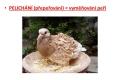 ptác i-stavba těla - 13