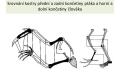 ptác i-stavba těla - 16