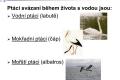 ptáci vodní - 02