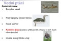 ptáci vodní - 03