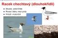 ptáci vodní - 11