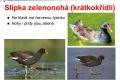 ptáci vodní - 16