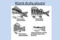 ryby-stavba-tela-06
