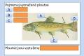 ryby-stavba-tela-16