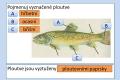 ryby-stavba-tela-21