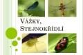 vazky,stejnokridli-01