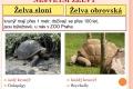 07-zelvy