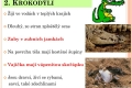 10-krokodyli