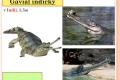 14-krokodyli