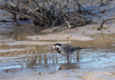Ptáci břehů tekoucích vod