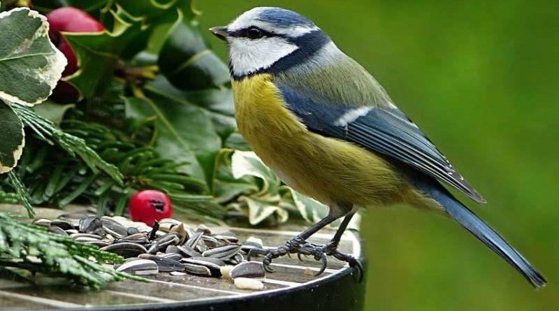 Poznávačka ptáků lesa a křovin