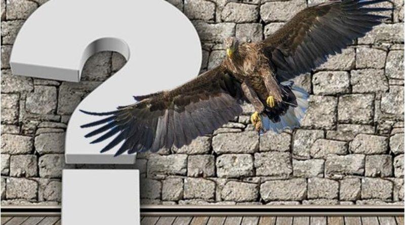 Poznej ptáčky podle popisu