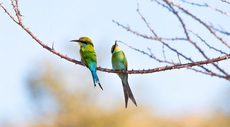 Poznávačka ostatních ptáků