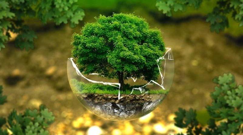 Poznávání listnatých stromů